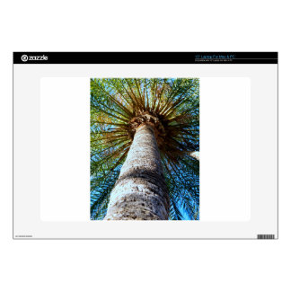 Palm Tree Laptop Decal
