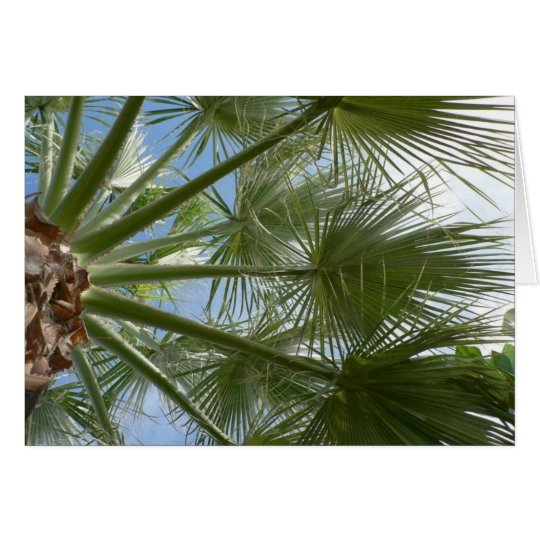 Palm Tree Leaves Card