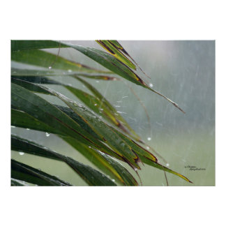 Palm tree leaves Raindrops Poster