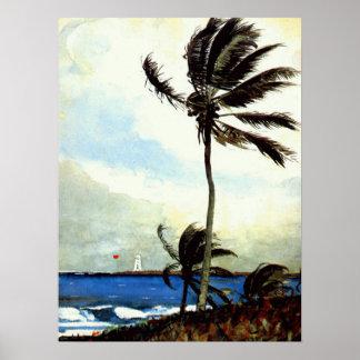 'Palm Tree-Nassau' Poster