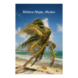 Palm Tree on the Riviera Maya, Mexico Poster