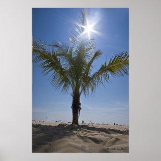 Palm Tree, Photo By: Joe Dantone Poster