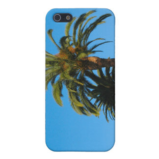 Palm Tree photograph iPhone SE/5/5s Cover