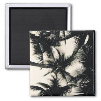 Palm Tree Photograph Magnet