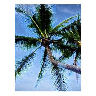 Palm Tree Post Card