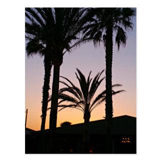 Palm Tree Purple Sunset Photography Postcard