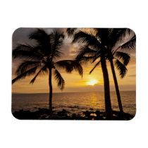 Palm tree sunset magnet