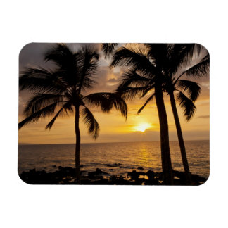Palm tree sunset magnet