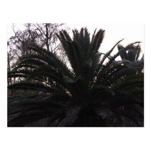 Palm Tree Sunset Postcard
