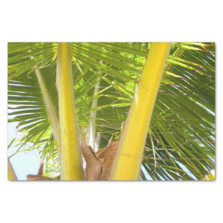 "Palm Tree Tropical Design 10"" X 15"" Tissue Paper"