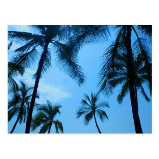Palm Trees and Blue Skies Postcard