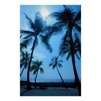 Palm Trees and Blue Skies Poster