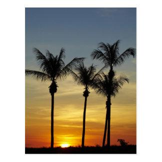 Palm trees and sunset, Mindil Beach, Darwin Postcard