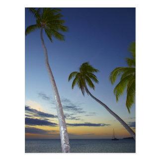 Palm trees and sunset, Plantation Island Resort Postcard
