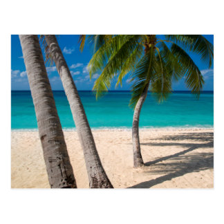 Palm trees and turquoise water along Seven-Mile Postcard