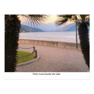Palm trees beside the lake postcard