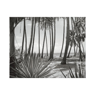 Palm Trees Black and White Fine Art Photography Canvas Print