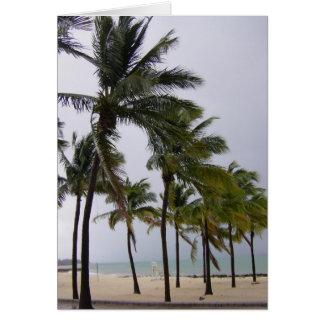Palm Trees Coconut Tree Grand Bahamas Card