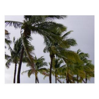 Palm Trees Coconut Tree Grand Bahamas Postcard