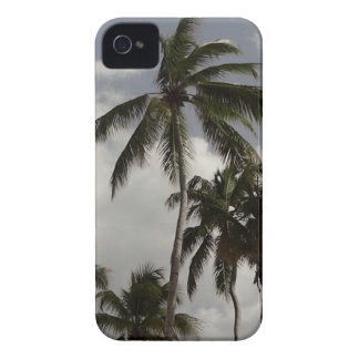 Palm Trees Dominican iPhone 4 Case-Mate Cases