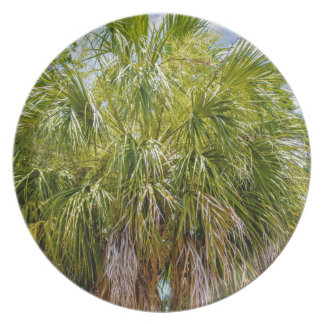 palm trees in the tropics plate