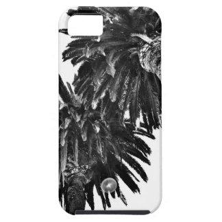 Palm trees iPhone SE/5/5s case