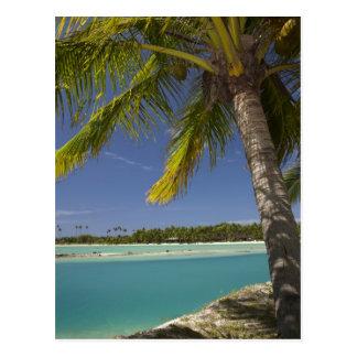 Palm trees & lagoon, Musket Cove Island Resort Postcard