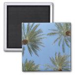 Palm Trees Magnet Fridge Magnets