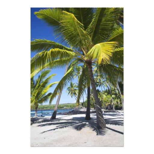 Palm trees, National Historic Park Pu'uhonua o 2 Photograph