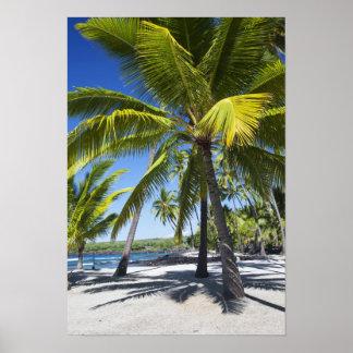 Palm trees, National Historic Park Pu'uhonua o Poster