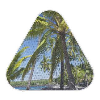 Palm trees, National Historic Park Pu'uhonua o Speaker