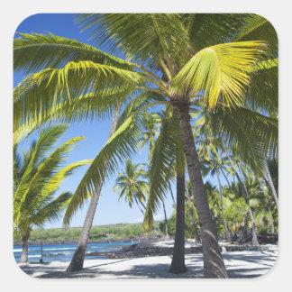 Palm trees, National Historic Park Pu'uhonua o Square Sticker