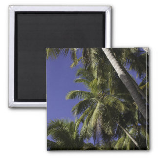 Palm trees on a Caribbean tropical island 2 Inch Square Magnet
