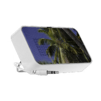 Palm trees on a Caribbean tropical island Speakers
