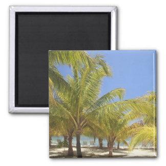 Palm Trees on a Honduras White Sand Beach 2 Inch Square Magnet