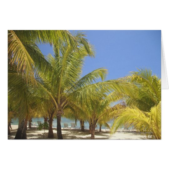 Palm Trees on a Honduras White Sand Beach Card