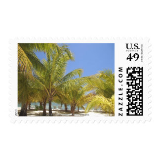 Palm Trees on a Honduras White Sand Beach Postage Stamps
