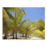 Palm Trees on a Honduras White Sand Beach Postcard