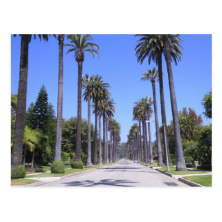 Palm trees on a street in Los Angeles Postcard