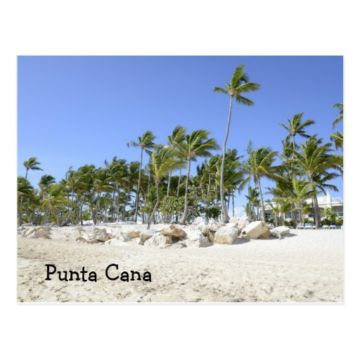 palm trees on a tropical beach post cards