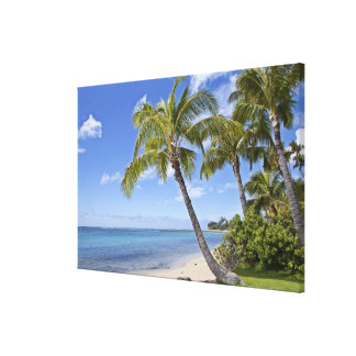Palm trees on the beach in Hawaii. Canvas Print