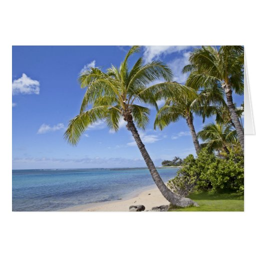 Palm trees on the beach in Hawaii. Greeting Card