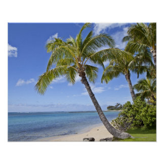 Palm trees on the beach in Hawaii. Poster
