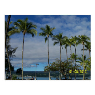 Palm Trees on the Big Island of Hawaii Postcard
