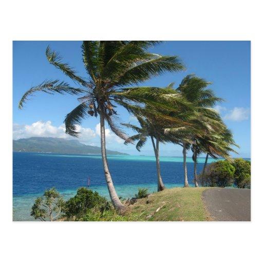 Palm Trees on the Island of Taha'a    Tahiti Postcard
