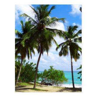 Palm Trees on Tropical Seascape Postcard
