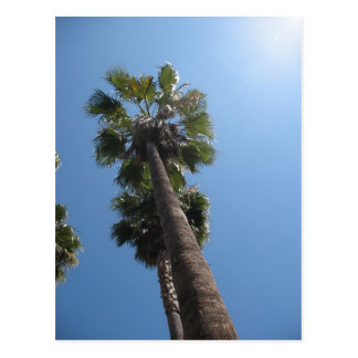 Palm Trees Post Card