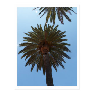 Palm Trees Post Cards