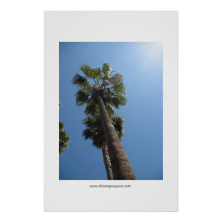 Palm Trees Poster Print