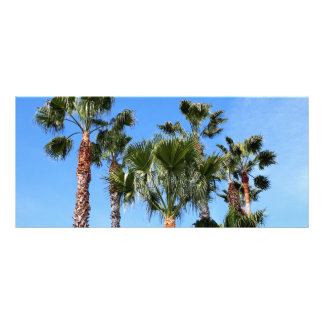 Palm Trees Rack Card